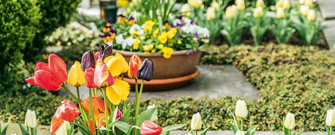 Tipps und Termine Schwäbische Alb April 2019
