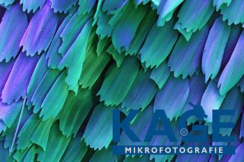 Alblust Fruehjahr 2019 Schmetterlingsfluegel Kage Mikrofotografie